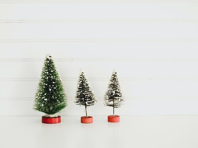 Spruce, Scotch Pine, Noble Fir – Oh My! Which Type Of Christmas Tree Is Decking Your Halls This Season?
